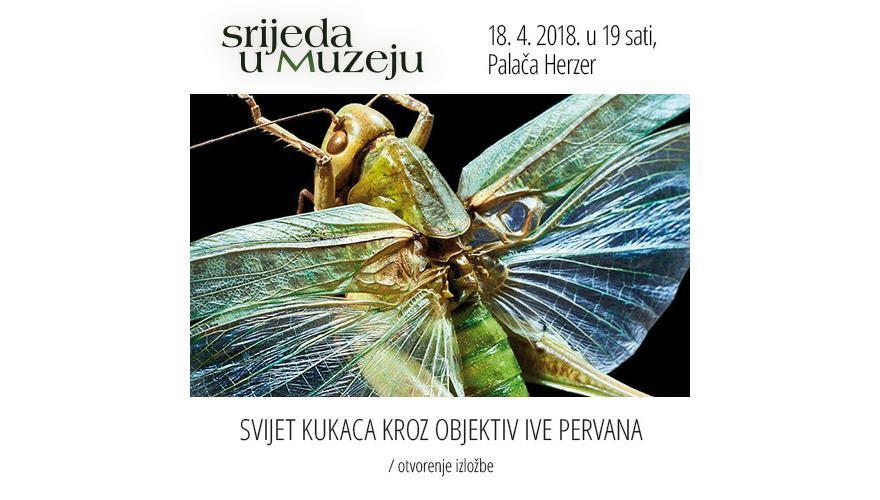 Svijet kukaca kroz objektiv Ive Pervana